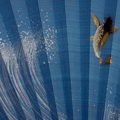 豪快に描かれた水しぶきと 躍動感のある鯉が描かれて います。